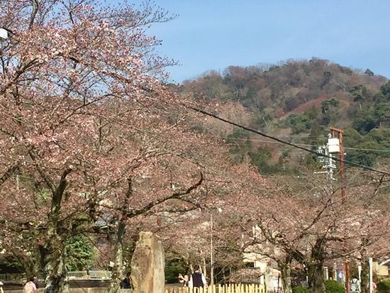 桜20170404As.jpg