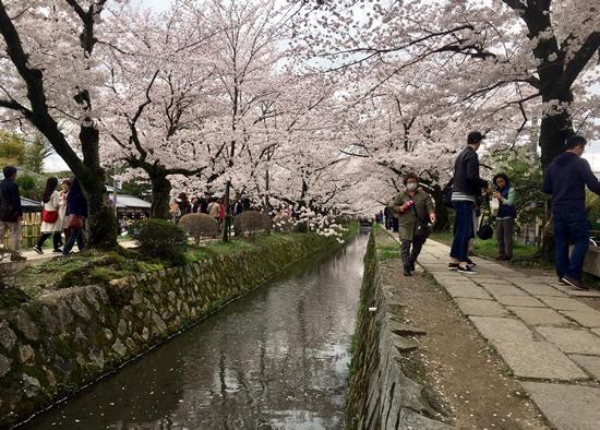 桜20170410Bs.jpg