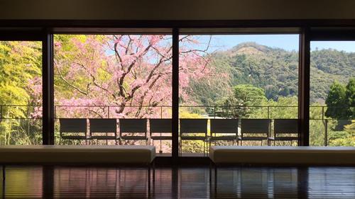 桜20180330aS.jpg