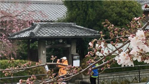 桜20190402cS.jpg