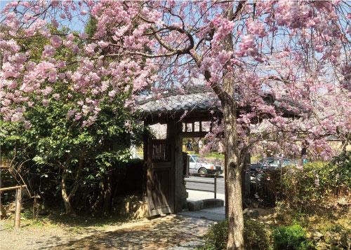 桜20190406aS.jpg