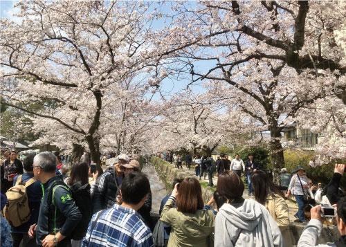 桜20190406cS.jpg