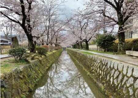桜20200327aS.jpg