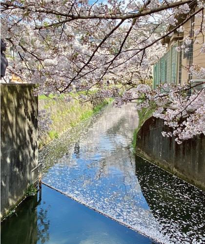 桜20200405bS.jpg