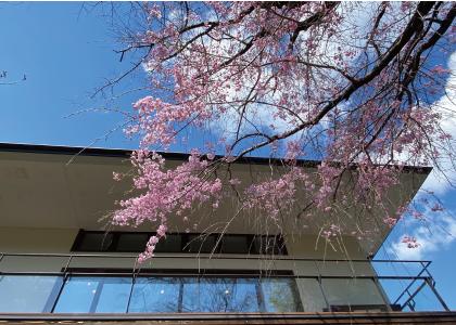 桜20200405cS.jpg
