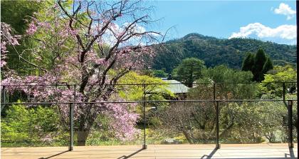 桜20200405dS.jpg