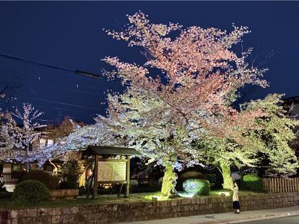 桜20200405eS.jpg