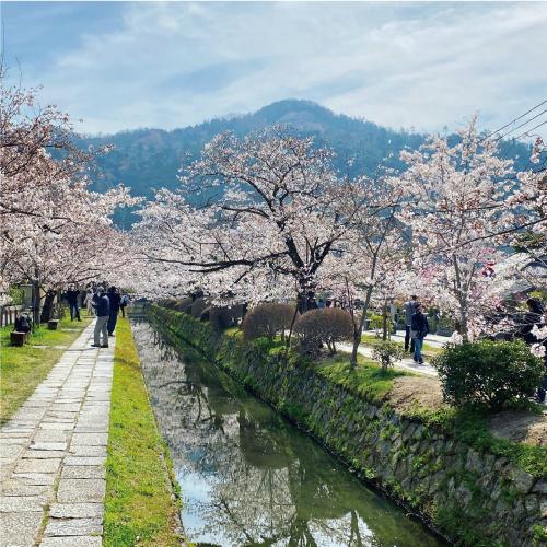 桜20210327AS.jpg