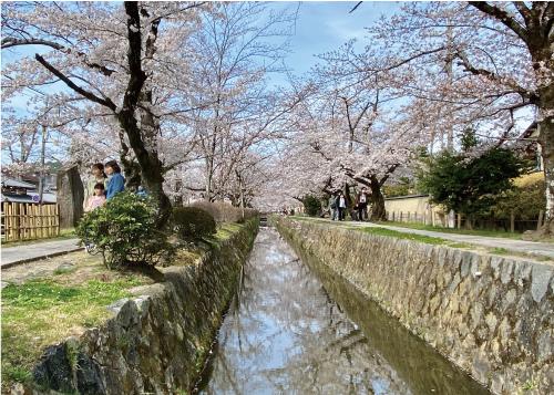 桜20210327BS.jpg