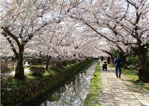 桜20210329BS.jpg