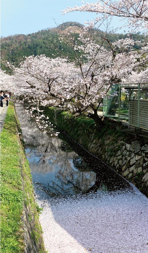 桜20210329CS.jpg