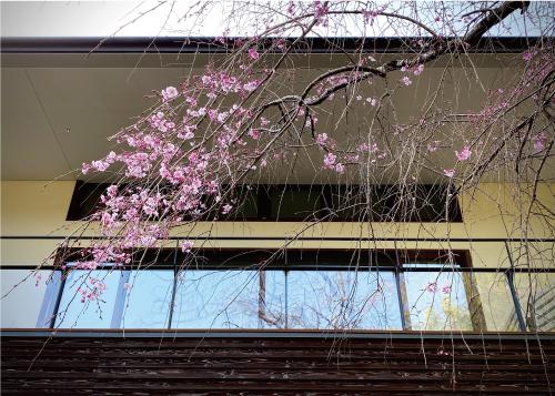桜20210329ES.jpg
