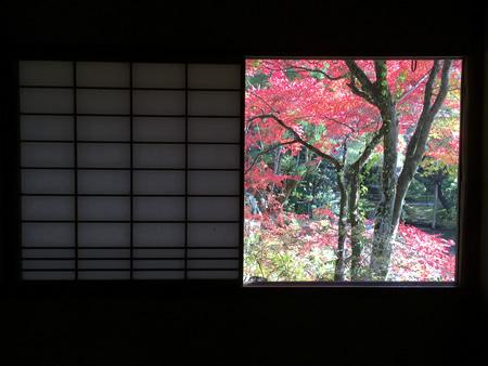 紅葉20141122CS.jpg
