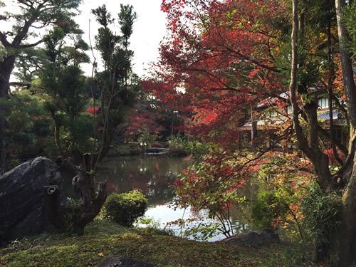 紅葉20151129fS.jpg