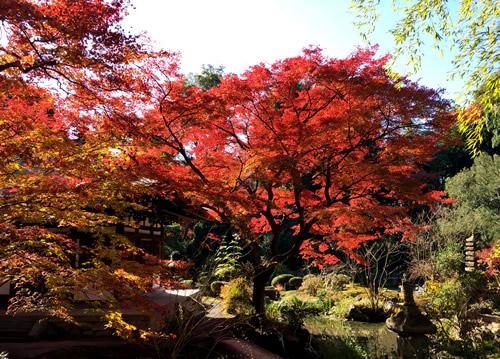 紅葉20151207bS.jpg
