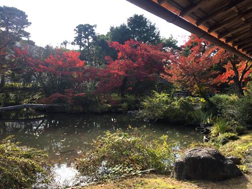 紅葉20161116HS.jpg